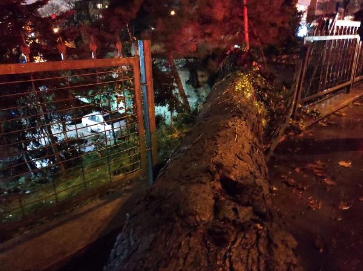 Beşiktaş ta asırlık çınar ağacı devrildi