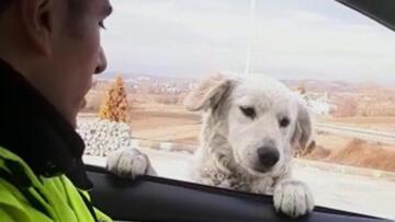 Samsun'da trafik polisinden sevimli köpeğe gülümseten soru