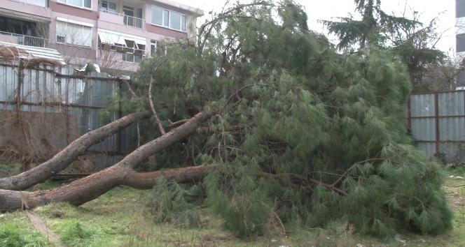 Yüz yıllık ağacın kesildiği gören mahalleli ayağa kalktı